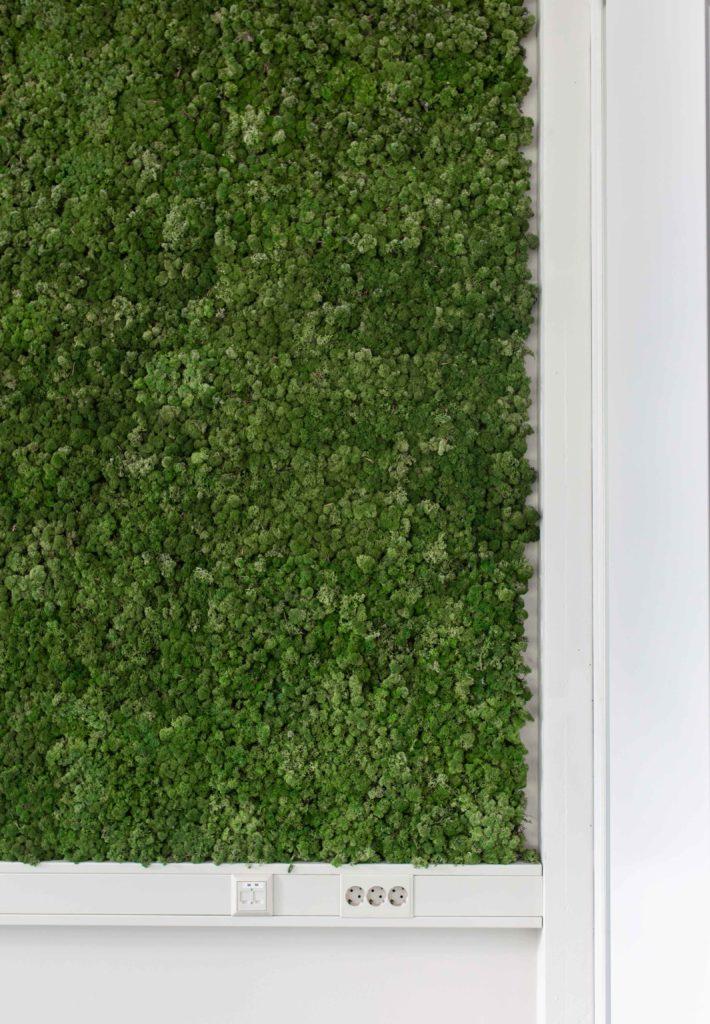 Groene wand op de werkplek